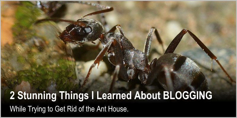 2 Things I Learned About Blogging While Trying to Get Rid of the Ants House.
