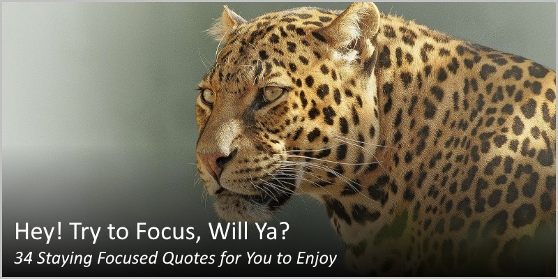 34 Staying Focused Quotes – Hey! Try to Focus, Will Ya?